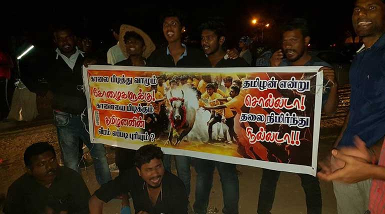 Tamil Nadu Youngsters Jallikattu Protest Becomes Role Model