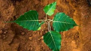 Saving Environment Is Mandatory